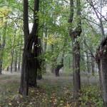2011.10.15. Šiberna (21)