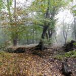 2011.10.15. Šiberna (87)